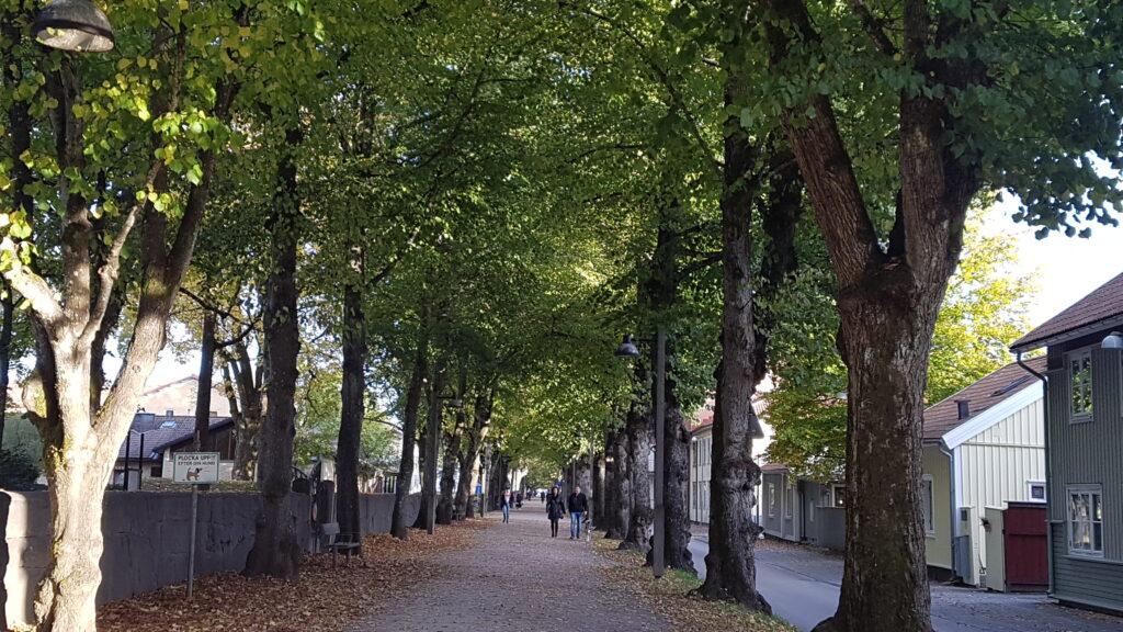 Norra Ringgatan